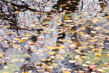City autumn pond