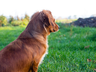 Beautiful small cute brown dog landscape