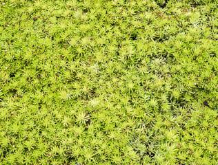Closeup of the fresh green plant.