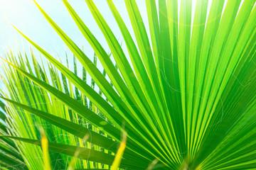 Olindana Photos Images Assets Adobe Stock