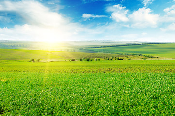 Green field and blue sky with light clouds. Above the horizon is a bright sunrise.