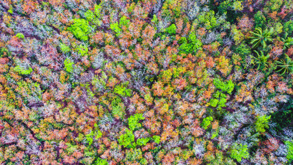Aerial view forests are changing color.