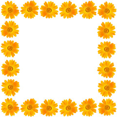 Frame of beautiful yellow flower on white background