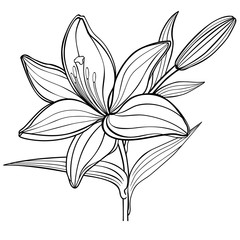 A lily flower with a bud. black and white. linear drawing. coloring book for adult and older children