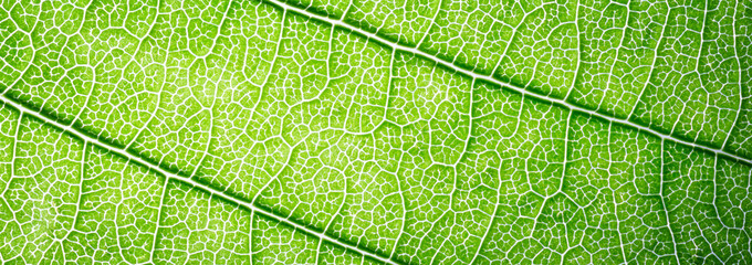 Web banner green leaves macro texture background