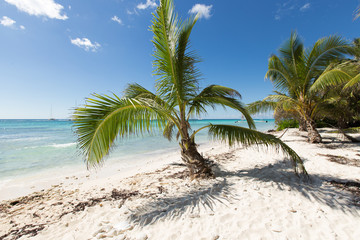 Scenic Beach With Palm Tree and white sand