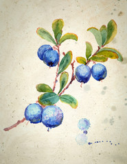 Watercolor illustration of Blueberry. A branch with leaves and berries, on beige vintage background