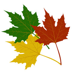 maple leaves red green yellow vector illustration