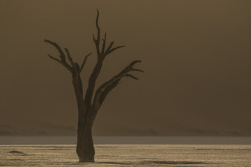 Dead trees in the middle of the namibia desert