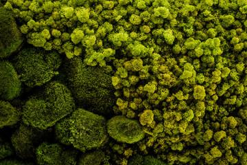 Mech gromada zielonych roślin