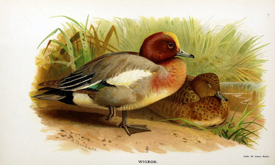 Illustration of bird.