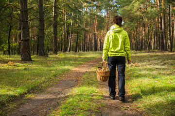 Woman picking edible mushrooms in autumn forest.