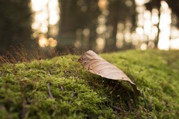 Couché de soleil dans la forêt .
