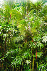 Lush Tropical Foliage