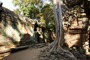 Ta Prohm Temple, Temples of Angkor, Cambodia