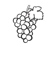 Cluster of grapes with leaf sketch icon for web, mobile and infographics. Hand drawn Cluster of grapes vector icon isolated on white background.