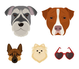 Muzzle of different breeds of dogs.Dog breed Stafford, Spitz, Risenschnauzer, German Shepherd set collection icons in cartoon style vector symbol stock illustration web.