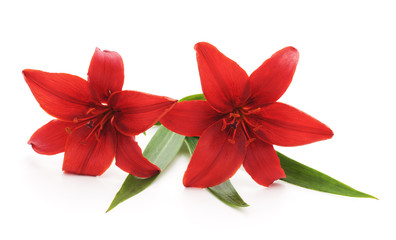 Two red lilies.