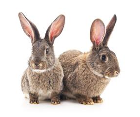 Brown baby rabbits.