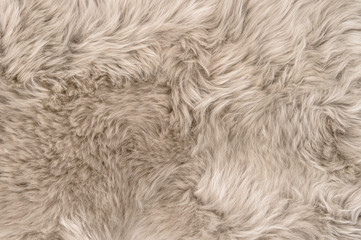 Natural sheepskin rug background texture sheep fur Wall mural