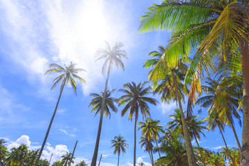 Panoramic view of tropical beach with coconut palm trees.