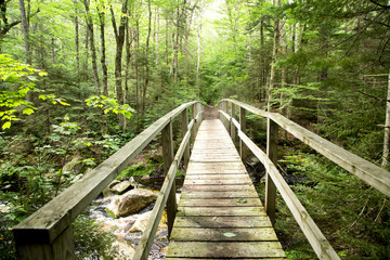 Bridge to the forest