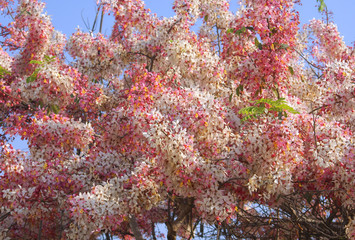 tree, autumn, leaves, red, nature, fall, trees, spring, sky, flower, yellow, season, pink, foliage, leaf, bloom, cherry, blue, blossom, sakura, colorful, green, blooming, orange, park