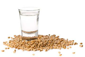 German hard liquor Korn Schnapps in shot glass with wheat grains