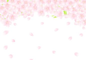 サクラの花のアーチ 桜吹雪 イラスト