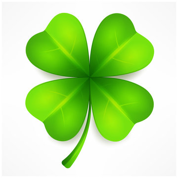 Lucky clover leaf, four isolated on white, for St. Patrick's