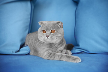 Cute cat lying on sofa