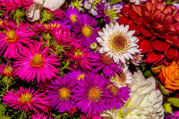 Photo of close-up abstract flower background consist of many flowers