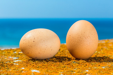 Two chicken eggs with orange and blue sea