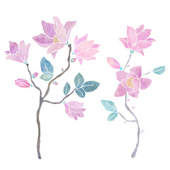 Hand painted floral watercolor set, magnolia branches ,flowers, leaves