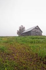 Fog On The Autumn Fields
