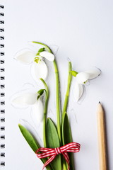 Snowdrops and a pencil on white paper