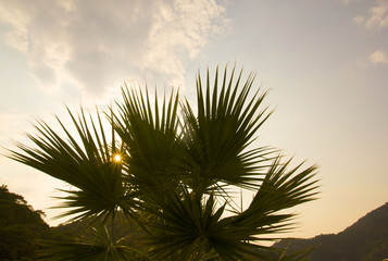 Green palm tree on the sky and mountains background. Blooming flowers. bright greenery and sunset. Summer hot weather. Holidays tropical vacations photo. Relax. Sunny lifestyle at the seaside. Sunrise