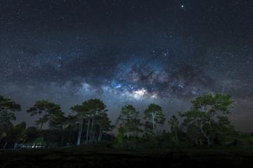 Milky Way over pine trees, Phu Kradueng National Park, Thailand