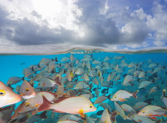 Shoal of fish underwater with clouds in the sky, split view above and below water surface, Rangiroa, Tuamotus, Pacific ocean, French Polynesia