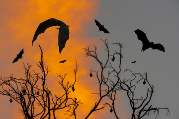 Silhouette of a flying bats