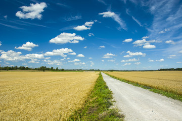 Road through field and blue sky