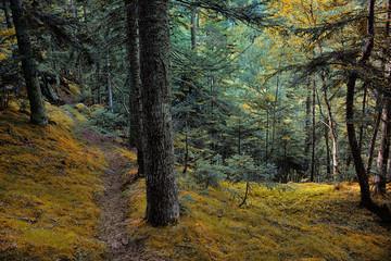 Bosque en el parque natural del Alto Pirineo