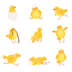 Set of funny yellow chicken in various situations. Cartoon character of little farm bird. Isolated flat vector design for postcard, sticker or children s book