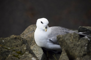 Portrait of a cheeky seagull