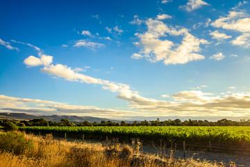 McLaren valley vineyards at sunset