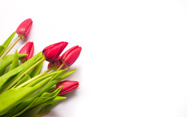 Red tulips on a white background. Romantic bouquet and a gift for Mother's Day or Valentine's Day in Spring