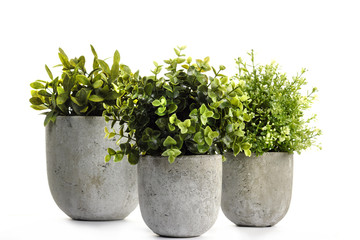 Pot green plants in and pots