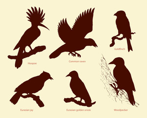 Vector set of birds: crow, hoopoe, oriole, woodpecker, jay, goldfinch