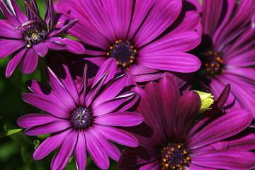 Purple blossoms under sun light