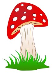 Pilz oder Fliegenpilz im grünen gras als Vektor im Cartoon Style auf einem weißen isolierten Hintergrund